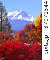 富士山 世界遺産 山の写真 37071544