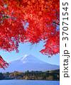 富士山 河口湖 河口湖畔の写真 37071545