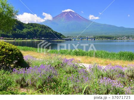 河口湖畔からの夏の風景-777631 37071725