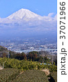 風景 富士山 山の写真 37071966