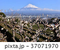 風景 富士山 山の写真 37071970