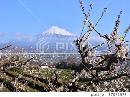 岩本山からの早春の風景-6918 37071973