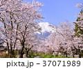 富士山 山 風景の写真 37071989