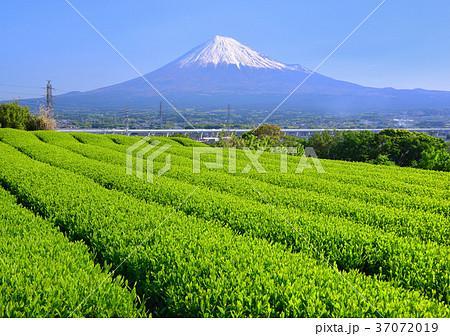 茶畑と富士山-6755 37072019