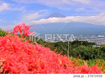 岩本山からの風景-6831 37072036