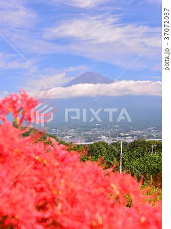 岩本山からの風景-6832 37072037