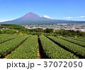 風景 富士山 山の写真 37072050