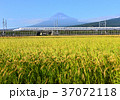 風景 富士山 水田の写真 37072118