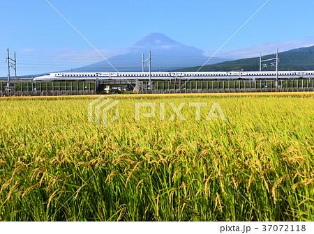 水田と新幹線と富士山-5517 37072118