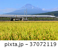 風景 富士山 水田の写真 37072119