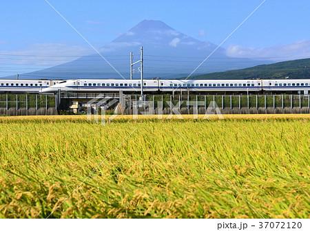 水田と初秋の富士山-5519 37072120