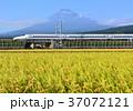 風景 富士山 水田の写真 37072121