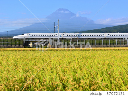 水田と富士山-5520 37072121
