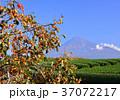 富士山 岩本山 秋の写真 37072217