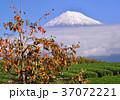 富士山 岩本山 秋の写真 37072221