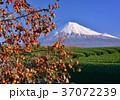 富士山 岩本山 秋の写真 37072239