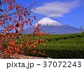 富士山 岩本山 秋の写真 37072243