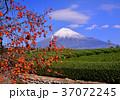 富士山 岩本山 秋の写真 37072245