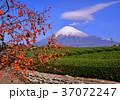 富士山 岩本山 秋の写真 37072247