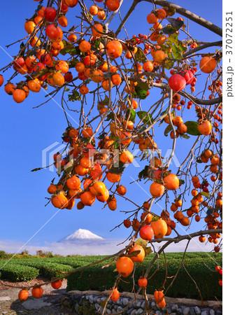 岩本山からの秋の風景-4762 37072251
