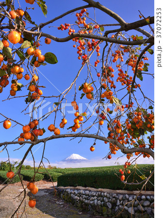岩本山からの秋の風景-4763 37072253