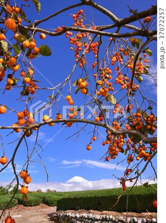 岩本山からの秋の風景-4765 37072257