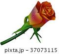 バラ 赤い 赤色のイラスト 37073115