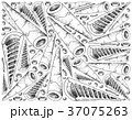 たけのこ タケノコ 竹の子のイラスト 37075263