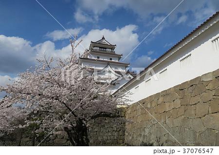 鶴ヶ城 桜 37076547