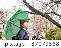 花見 女性 春の写真 37079568