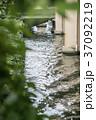 緑と川 37092219