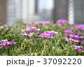 小さな花 37092220