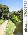 緑 グリーン 葉の写真 37095752