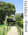 公園 緑 グリーンの写真 37095753