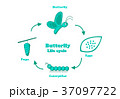 Butterfly life cycle in monochrome style, vector 37097722