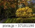 The golden autumn in Kislovodsk 37101190