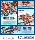 シーフード 海の幸 魚介類のイラスト 37105039