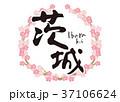 茨城 筆文字 桜 フレーム 37106624