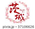 茨城 筆文字 桜 フレーム 37106626