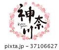 神奈川 筆文字 桜 フレーム 37106627