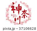 神奈川 筆文字 桜 フレーム 37106628