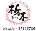 栃木 筆文字 桜 フレーム 37106786