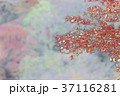 紅葉のイラスト 37116281