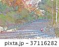 紅葉のイラスト 37116282
