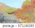 紅葉のイラスト 37116283