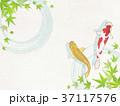 和紙 鯉 青紅葉のイラスト 37117576