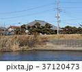 マコモの茂る霞ヶ浦の湖岸 37120473