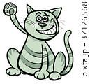 ねこ ネコ 猫のイラスト 37126568
