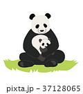 パンダの親子 イラスト 37128065