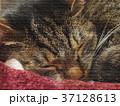 猫 昼寝 眠るのイラスト 37128613